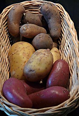 patate : pomme de terre