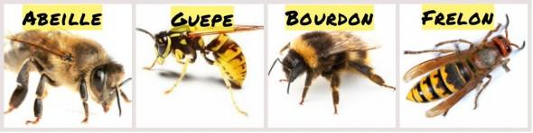 l 39 apiculture et l 39 abeille coop 39 icem. Black Bedroom Furniture Sets. Home Design Ideas