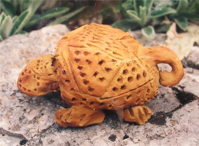 Une carapace comme maison coop 39 icem for Avoir une tortue a la maison